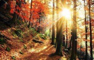 Lichtdurchfluteter Herbstwald mit bunten Blättern